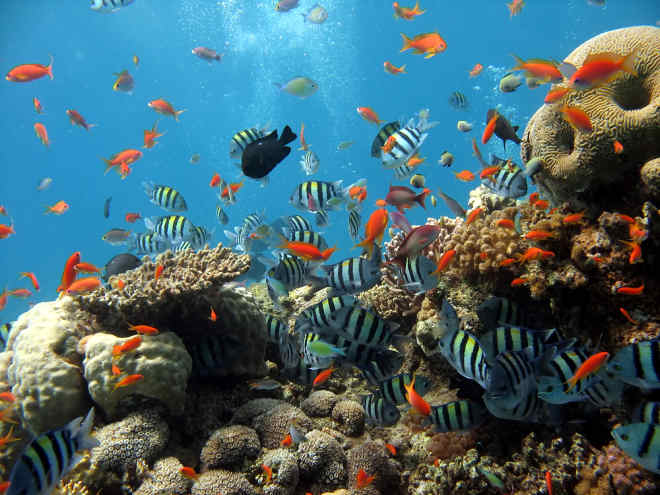 Foto: rudé moře je pro potápěče ráj